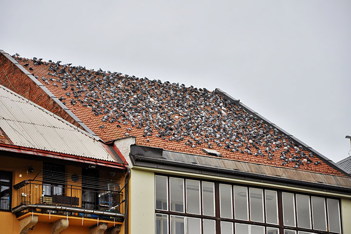 A2B Pest Control are able to install spikes to deter birds from roofs in Havering.