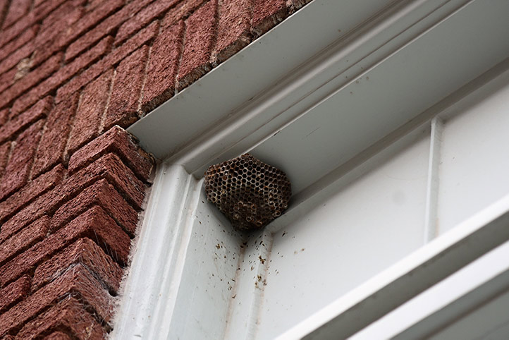 We provide a wasp nest removal service for domestic and commercial properties in Havering.